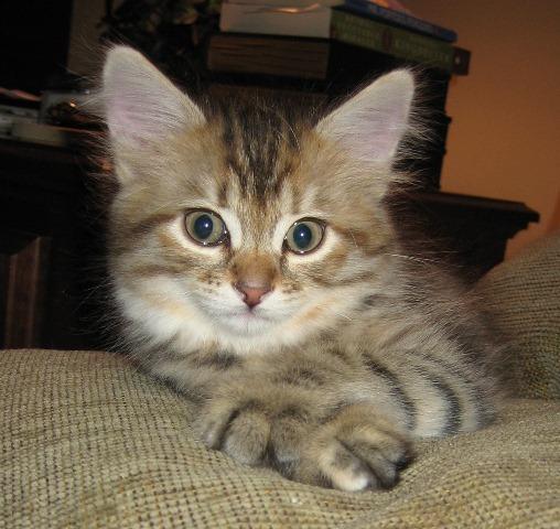Asthmatic Cat Litter